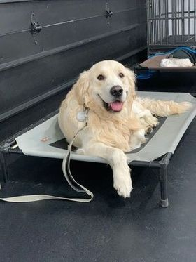 dog lounging on raised bed